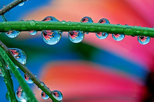 sunset drops | by Steve took it