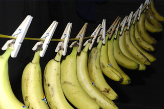 City bananas | by crosslens