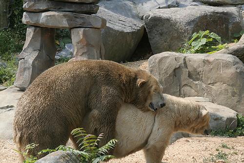 Sex zoo Nude Photos 44