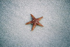 Starfish | by Jamie Anderson