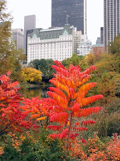 central park (5) | by kexi
