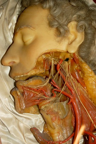 Exposed Neck And Jaw From The Wax Anatomical Models At La Flickr