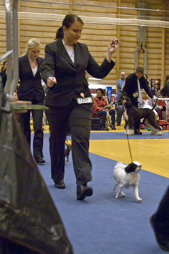 Katarina with Agnes in the Puppie Final ring | by Peter Remnemark