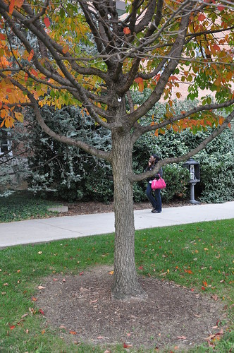Black gum trunk and lower limbs of black gum or black for Botanical gardens maryland