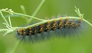 Caterpillar | by scattered1