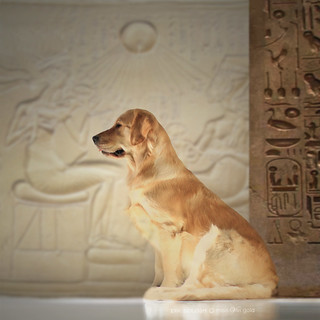 Posed Like A Gold Statue In An Egyptian Palace | by VeryViVi