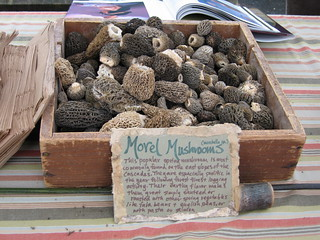 Morel Mushrooms at the Market | by plainsight
