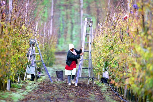 Worker pruning fruit trees | by World Bank Photo Collection