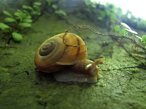 Snail | by MShades