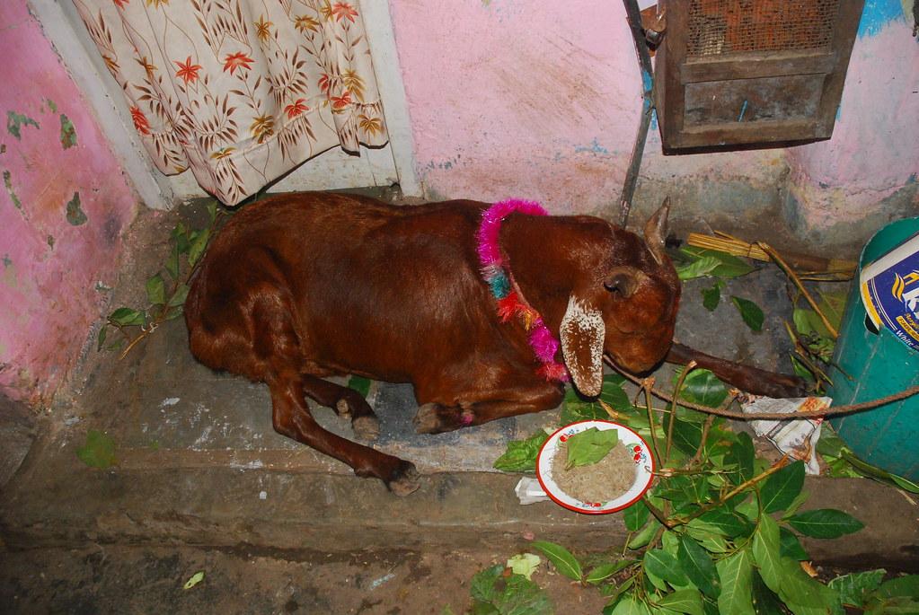 Must see Hindi Wikipedia Eid Al-Fitr Food - 5178192671_3b931048c1_b  Best Photo Reference_41659 .jpg