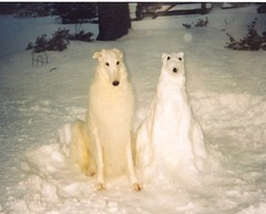 Mychtar and his Snowdog | by Ferlinka Borzoi (Deb West)