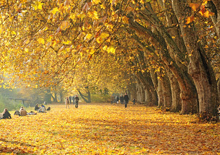 Golden carpet of leaves | by Habub3