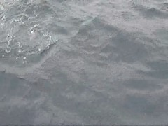 Sea Lion in Sitka, AK
