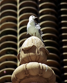 "Chicago - Marina City ""Lookout Bird"" 