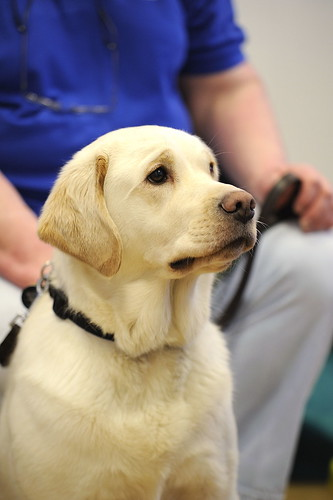 Guide Dogs Who Don T Make The Grade