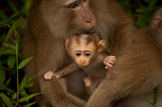 "Baby Monkey: ""I'm Outta Here!"" 