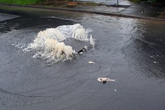 Overflowing sewer | by Iain Cuthbertson