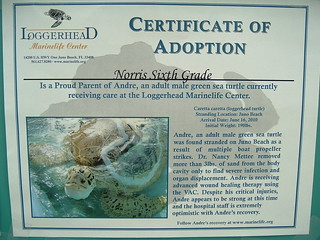 turtle adoption nov10 (2) | by Dogtrax