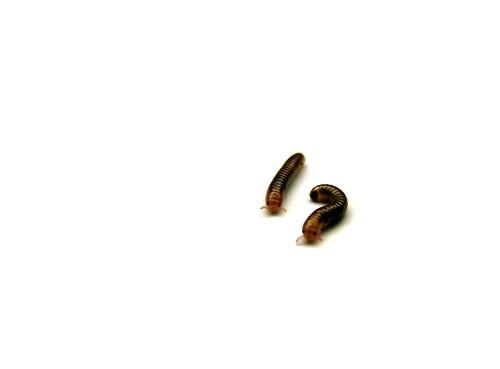 Image Result For Centimeters Full