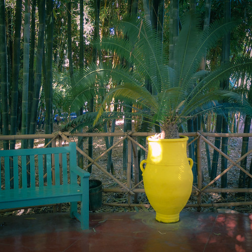 Jardin Majorelle | by never meant to see