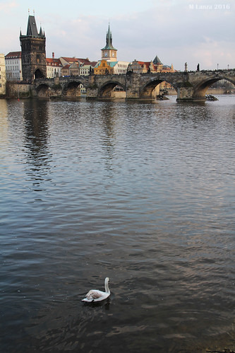 Swan and the Charles Bridge | by mlanza