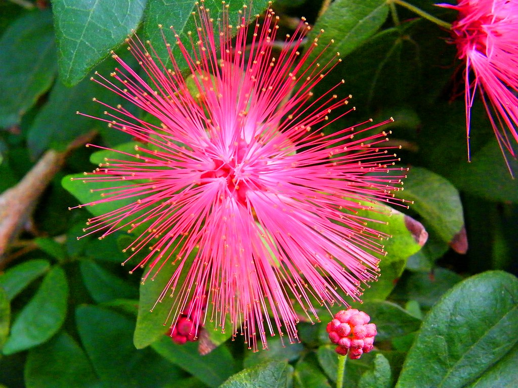 Fuzzy pink flower stanley zimny thank you for 31 million views fuzzy pink flower by stanley zimny thank you for 31 million views mightylinksfo