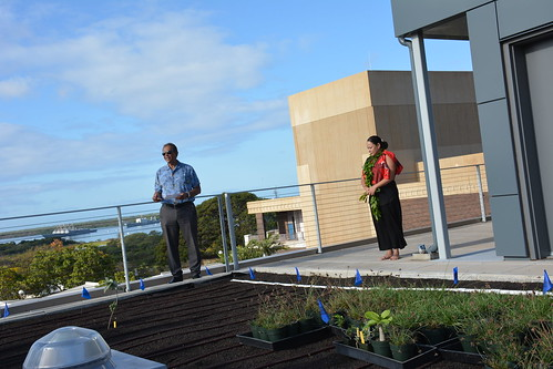 Earth Day Rooftop Planting