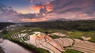 Indonesia Rice Field Indonesia