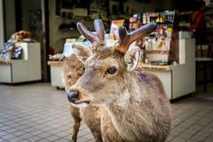 Nara Chugger