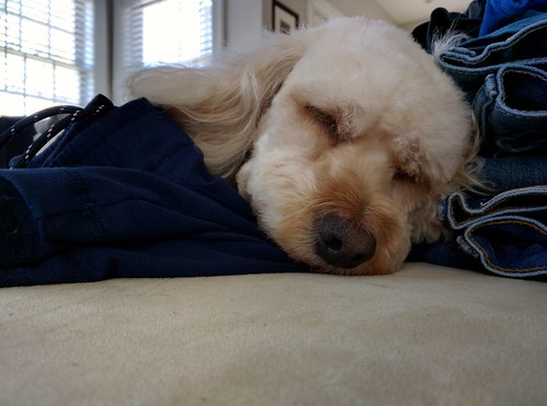 Annie falling asleep on fresh laundry | by .JohnW