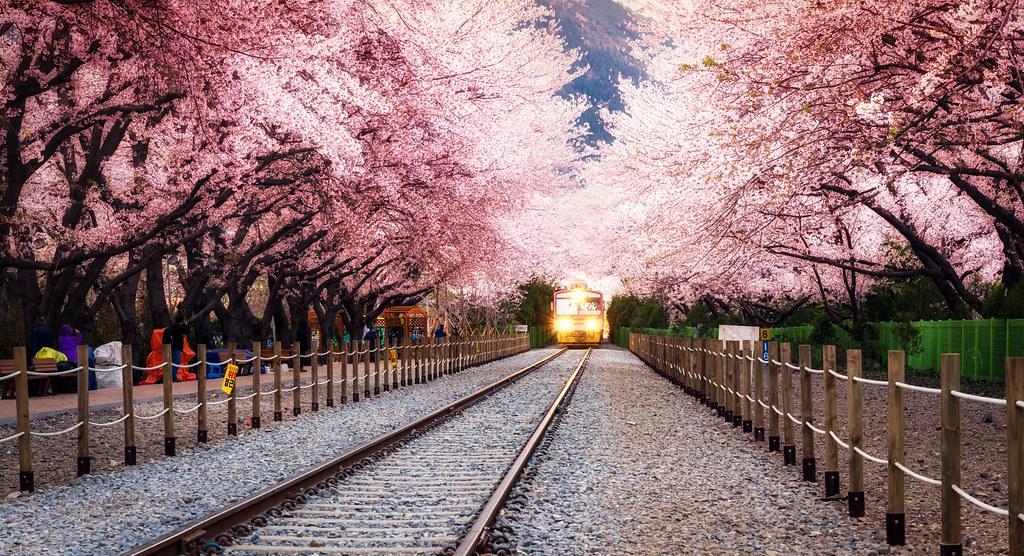 spring blossom station