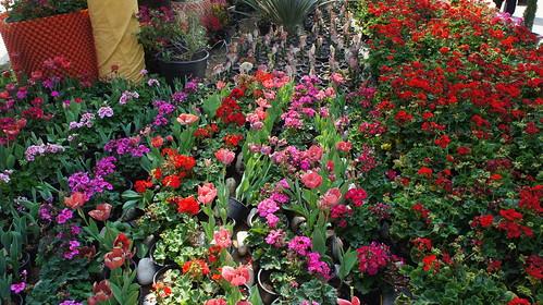 Flowerbeds including Tulip flowerbeds