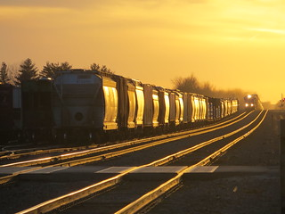 20141108 13 BNSF Zearing, Illinois | by davidwilson1949