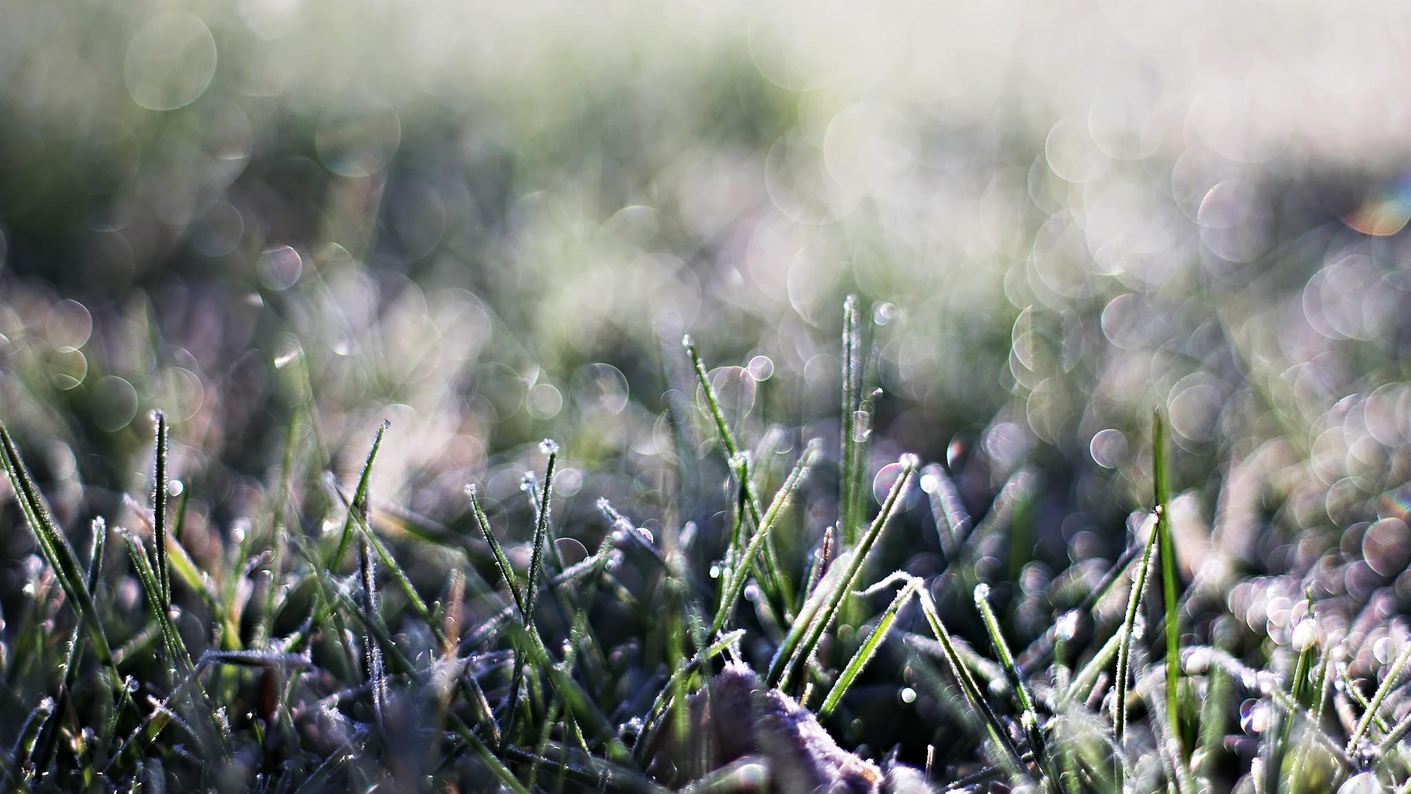 frozen garden grass
