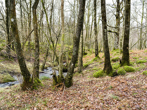 Hodge Close trees copy | by singingsnapper