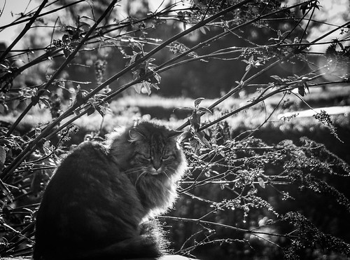 Backlit cat! | by judy dean