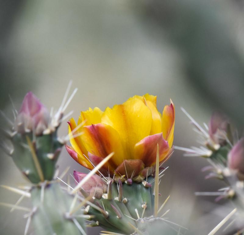Spiny blossom