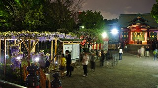 Kameido Wisteria Night illuminations | by Manish Prabhune