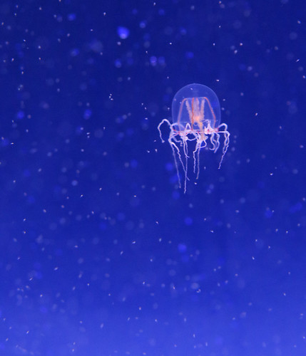 Jellyfish. | by Steve Cirone