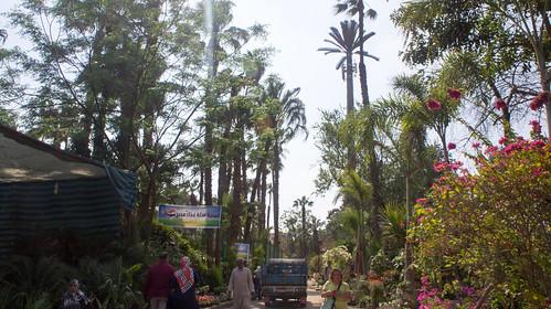 Inside El-Orman botanical garden