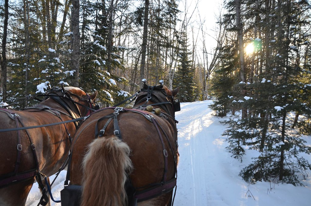 Image result for sleigh rides