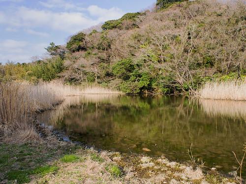 池子の森自然公園緑地エリア