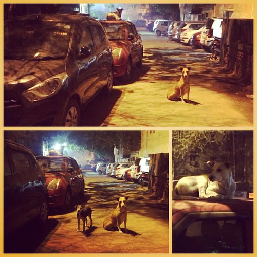 #Dogs have the #best #nightlife.  #delhi #street #life at #night | by Bharat Tiwari