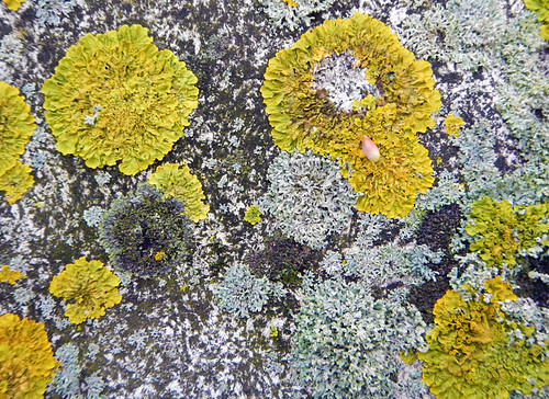 Abstract lichen texture on a wall in Bruges, Belgium