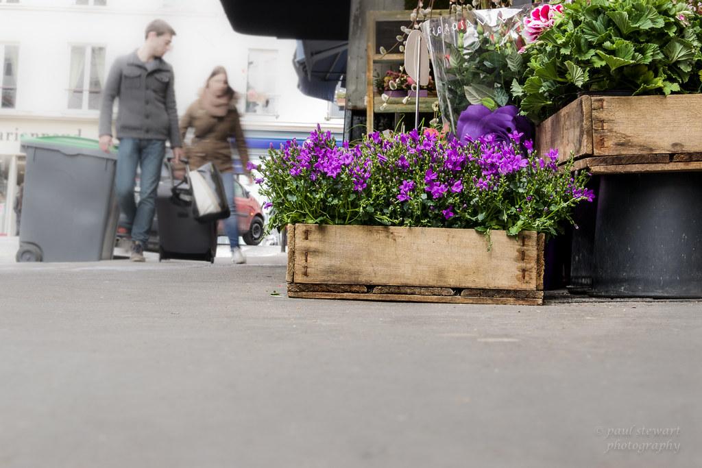 Spring Flowers For Sale Paul Stewart Flickr