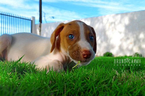 Puppy | by Bruno_Caimi