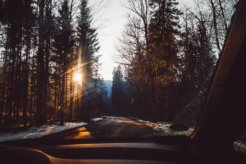 through forests filled with evening light | by the girl who made it on her own