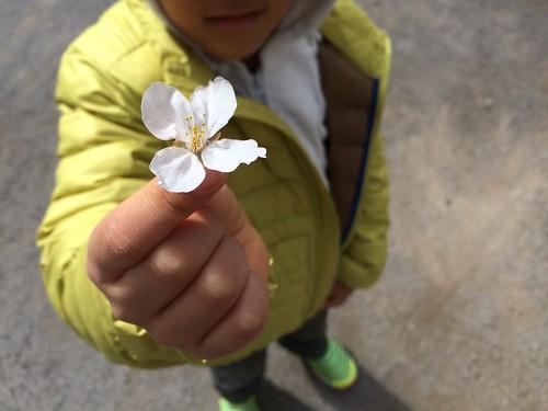 恵比寿公園の桜 2016.3.27