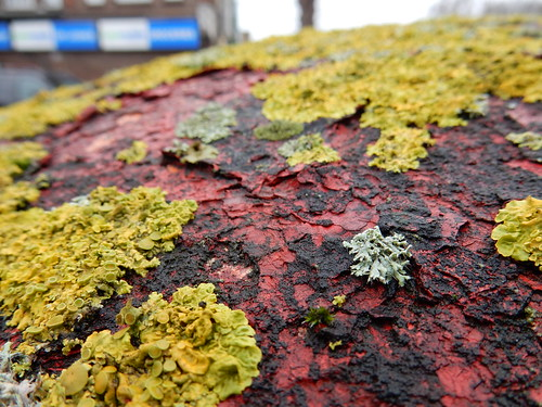 lichen on a postbox | by rjw1
