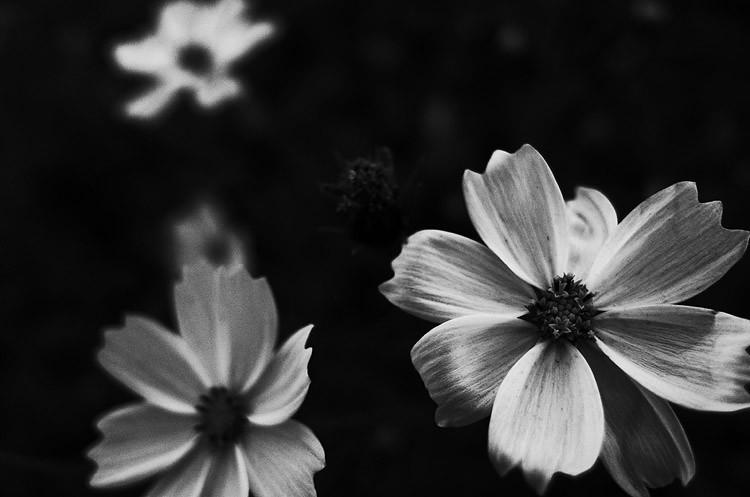心象攝影-花
